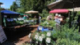 marketDay2.jpg