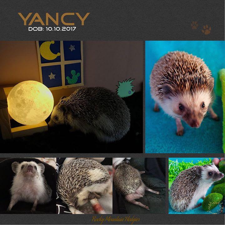 Yancy Pants! *Pet Only*