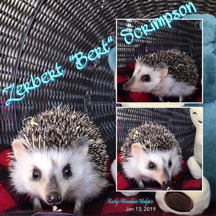 """Zerbert """" Bert """" Scrimpson"""