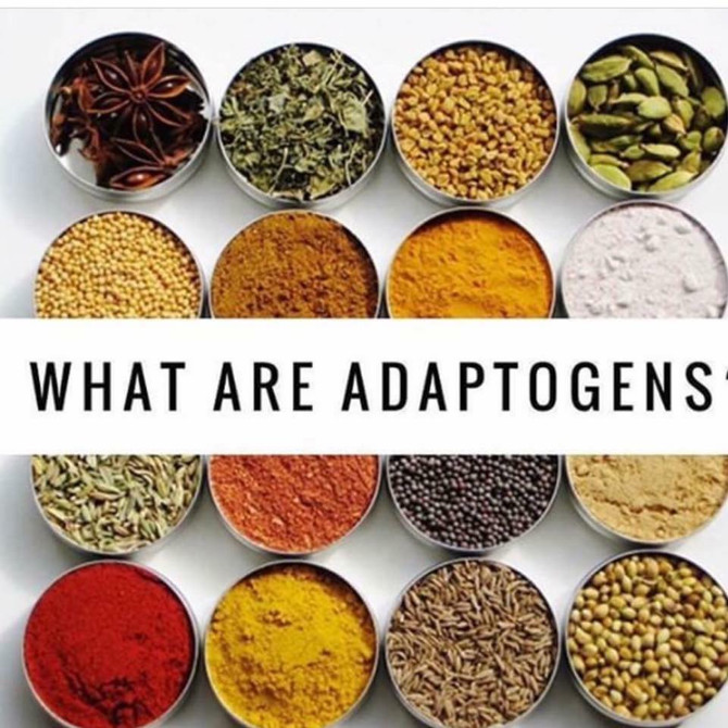 Why Adaptogens?