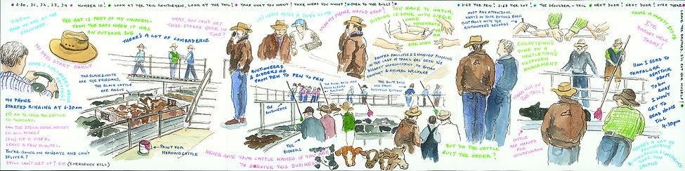 30 Newman Kathleen  - Cattle Buyer.jpg