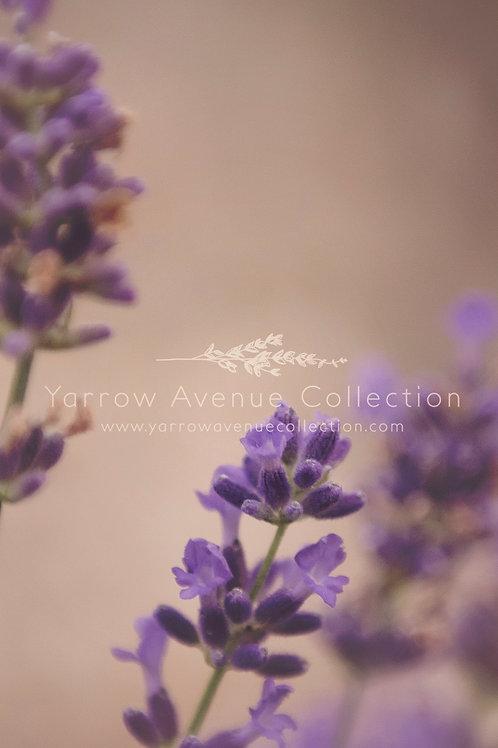 """Lavender"" iPhone Background"