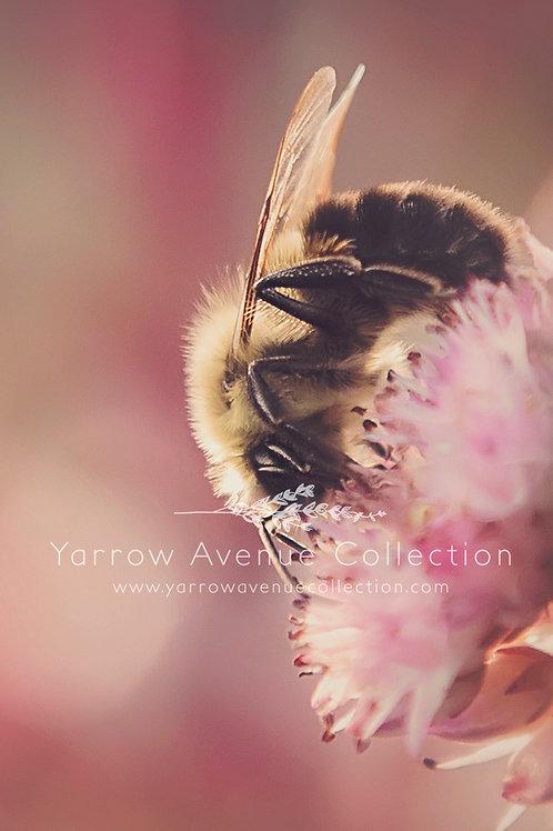 """Autumn Bee"" iPhone Background"