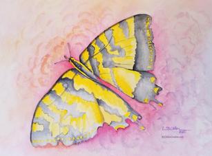 """Mariposa"" by Loretta McClellan"
