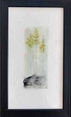 Cliffhanging Cedars