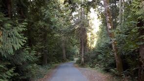 Hug a Tree: Forest bathing