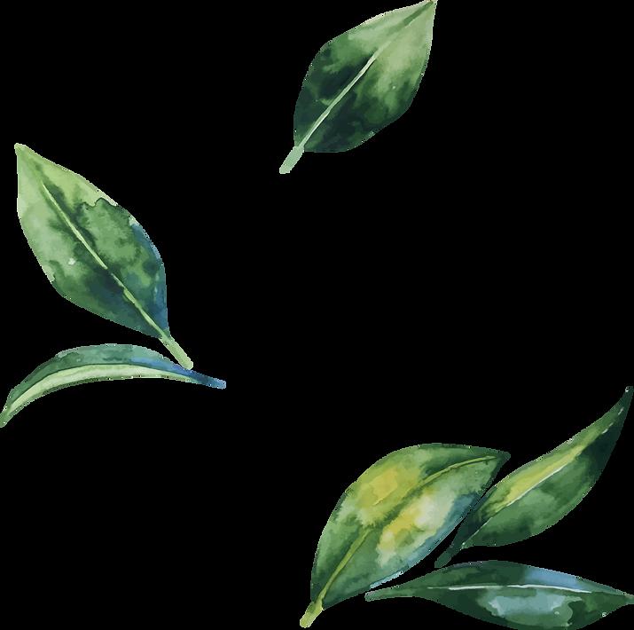 Watercolor-Leaves-PNG-Transparent-Image.