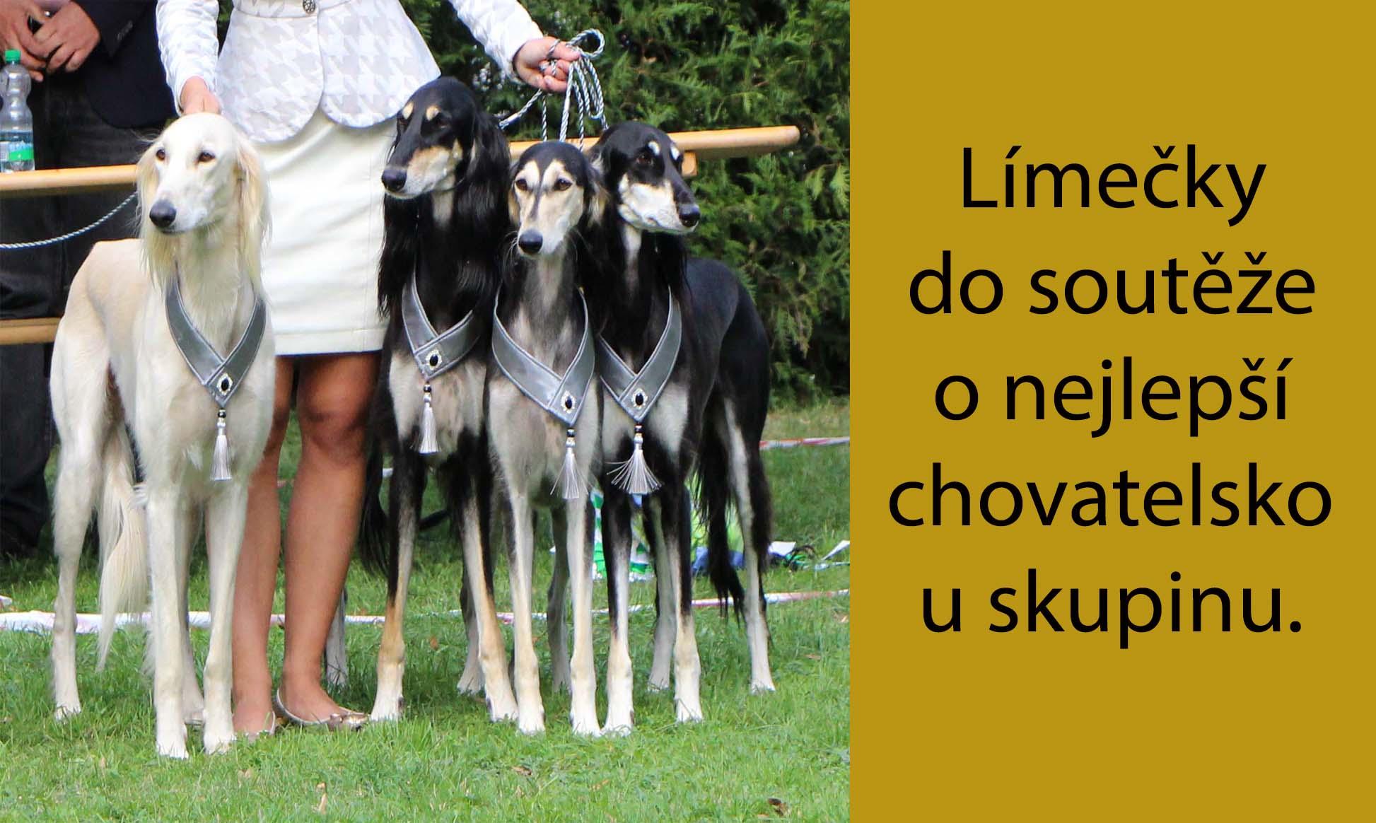 Chovka_šedá