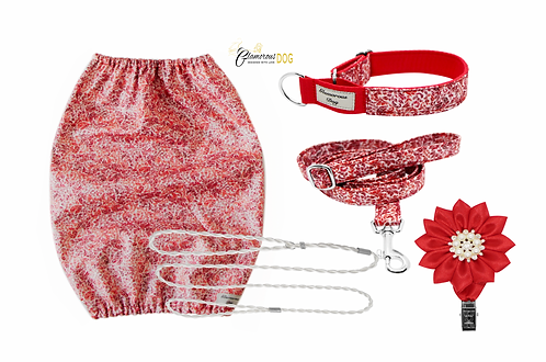 Set for puppy - red II