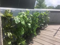 toit terrasse été 2018