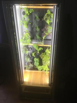 Cellier à plantes