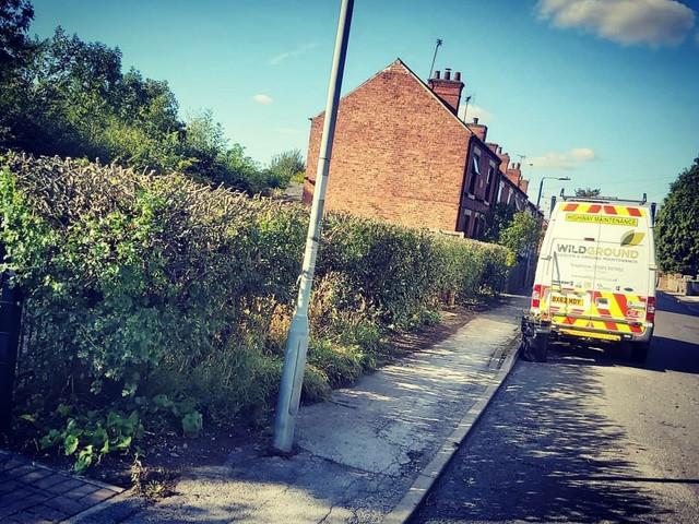 Hawthorn Hedge Reduction