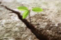 pousse-fleur-terre-aride.jpg