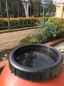 A rain barrel that has collected water
