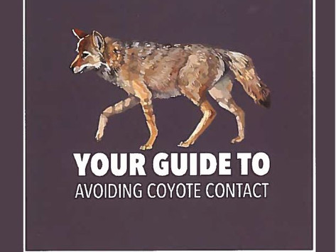 Coexisting with Glendale's Coyotes and Wildlife