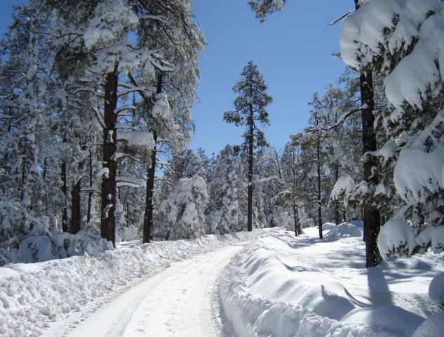 Snow On The Mogollon Rim
