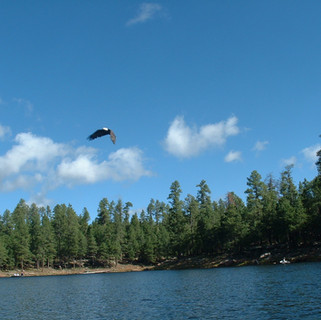 Eagle Over Woods Canyon Lake