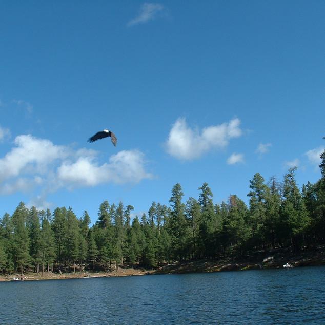 Eagle Over Woods Canyon Lake