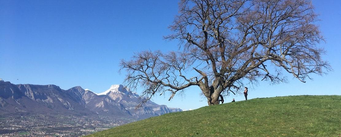 Chêne de Venon..jpg
