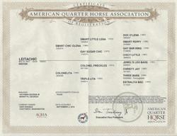 Leitachic Registration