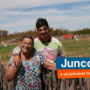 JUNCO COLHE OS PRIMEIROS FRUTOS