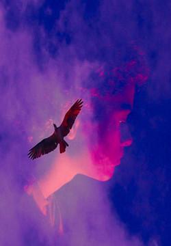 birdflightaltered-001_greetingcard.jpg
