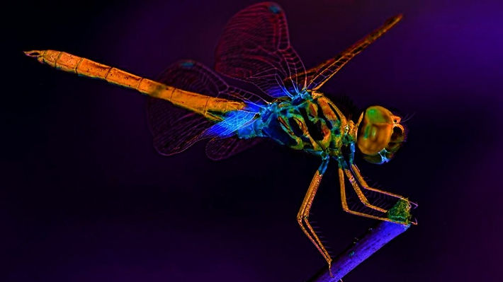 ornithopter_bckgrnd.jpg