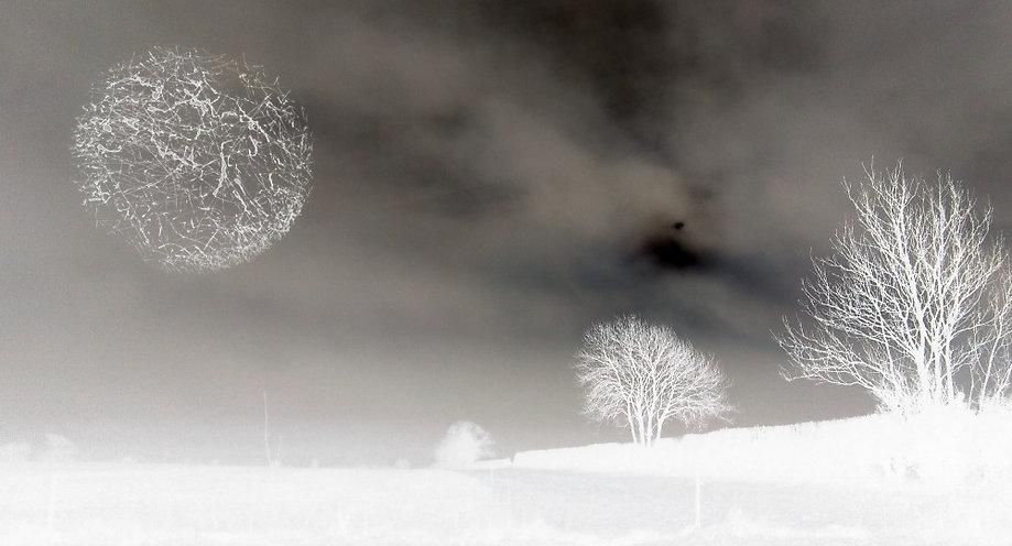 lrg_kent_trees_edited.jpg