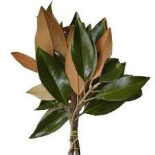 Magnolia Boughs
