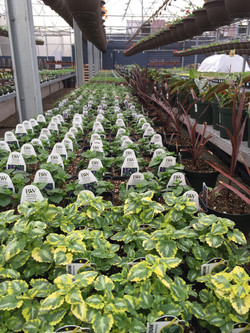 Alternative Choice Greenhouse