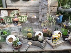 Alternative Choice Greenhouse Plants