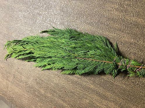 Leland Cypress Boughs