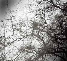 mistletoe (2).png