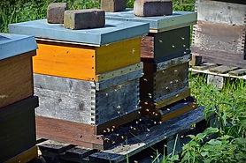 langstroth-hive.jpg