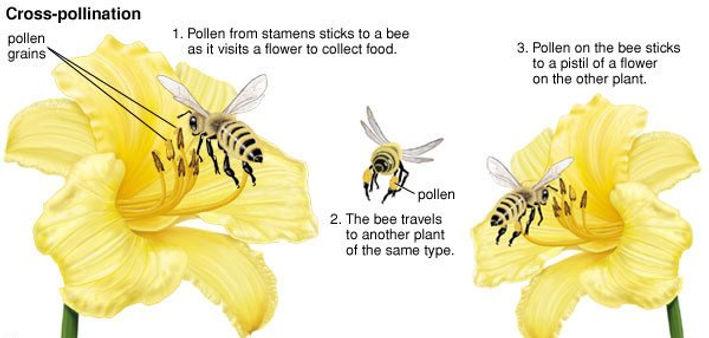 bee-polling.jpg