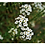 Thumbnail: Bee Pollination Grow Kit