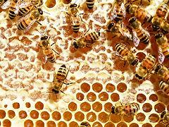 bees-345628__340.jpg