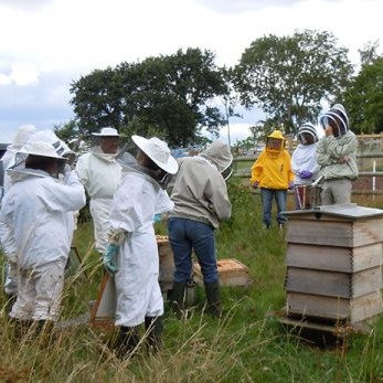 Be a Beekeeper for a Day: an Introduction to beekeeping