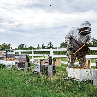 Complete Hive Starter Kit: everything you need, including the bees!