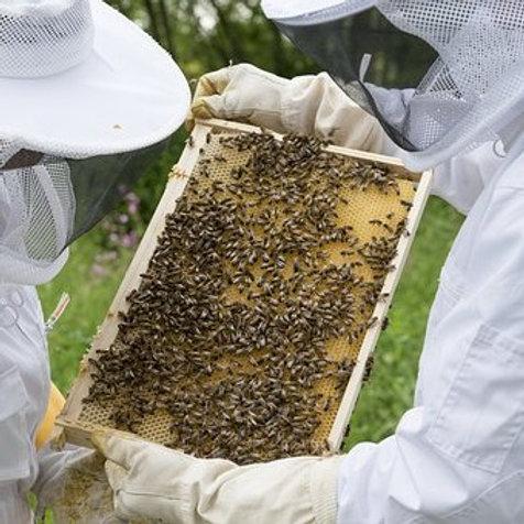 2hr Basics of Beekeeping Intensive Training