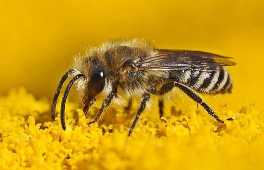 Silk Bee