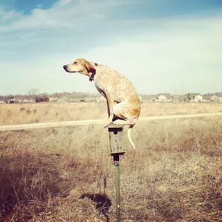 Лунный календарь на месяц Желтой Собаки 2016г.