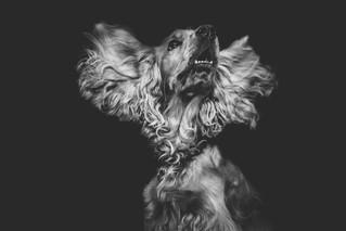 Лунный календарь на месяц Огненной Собаки 2020г.