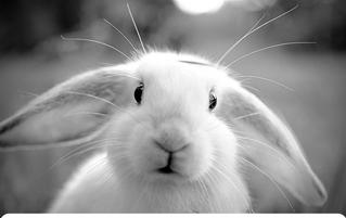 Лунный календарь на месяц Земляного Кролика 2020г
