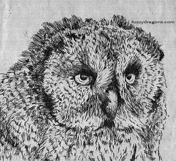 Fuzzy Owlet