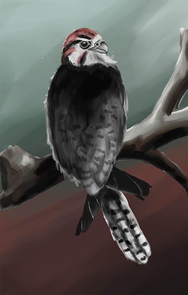 Tiny Angry Bird