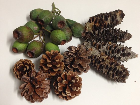 Birdtalk Bird Toys - Enrichment Pack Gumnuts Banksia Pods Pine Cones