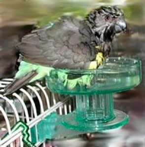 Birdtalk Bird Toys - Lixit Bird Bath