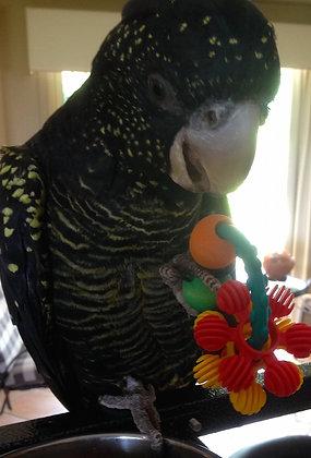Birdtalk Bird Toys - Play Ring Foot To