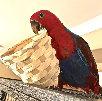 Birdtalk Bird Toys - 1 Mini Bamboo Basket
